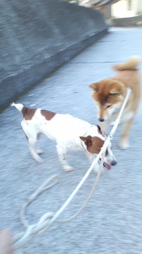 ☆犬の散歩代行